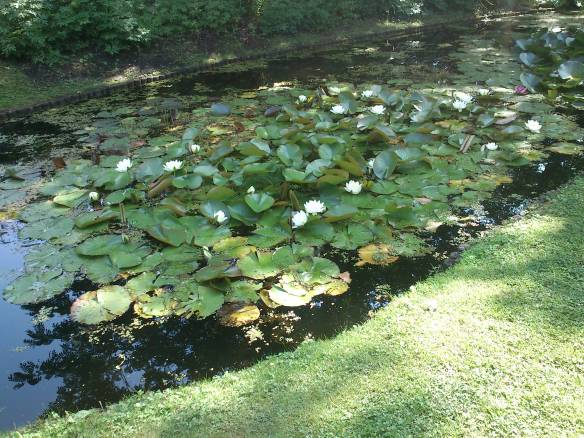 Pond of Water Lillies